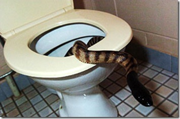 snake-in-dunny-01