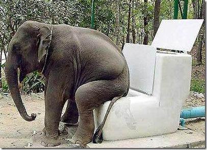 elephant-toilet
