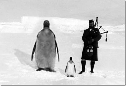 giant penguiin