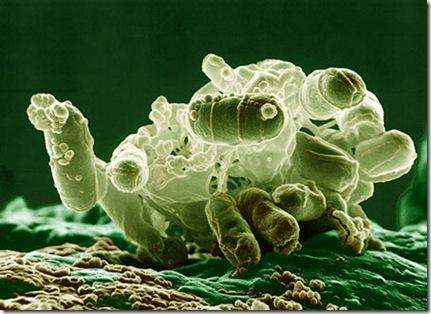 e coli bacterium