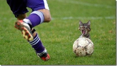 f-Funny-Cat-3539