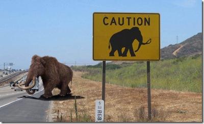 Mammoth-Road-Crossing--22709