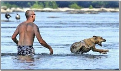 freakin_fish_justtouched_me_funny_dog_water_swimming_lol_picture