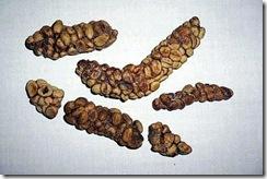 kopi-luwak-coffee-beans