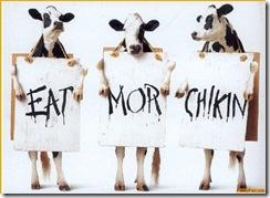 FunnyPart-com-cows