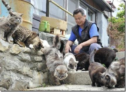 Cat-Island-Tashirojima-japan-1