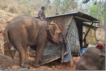 elephant demolition