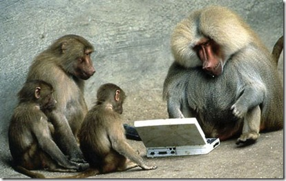 funny monkey using laptop facebook