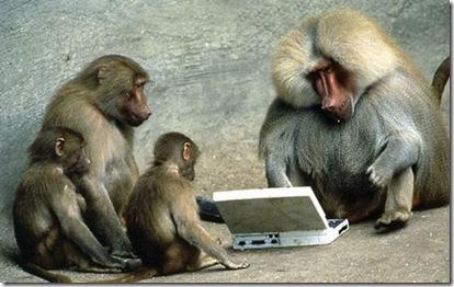 funny monkey using laptop facebook