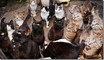 cat island cats gathering
