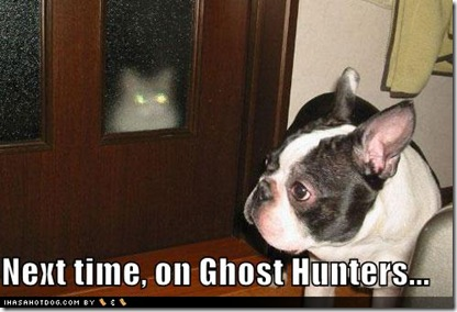 funny-dog-pictures-ghost-cat
