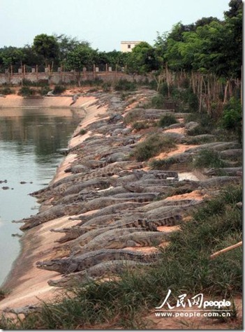 crocodile farm guangdong