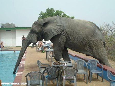 Elephant_Funny_Wallpaper