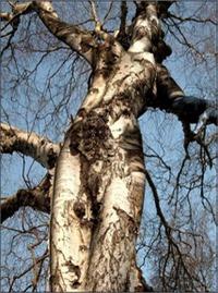 Weirdtree